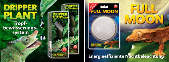 dripper plant - full moon