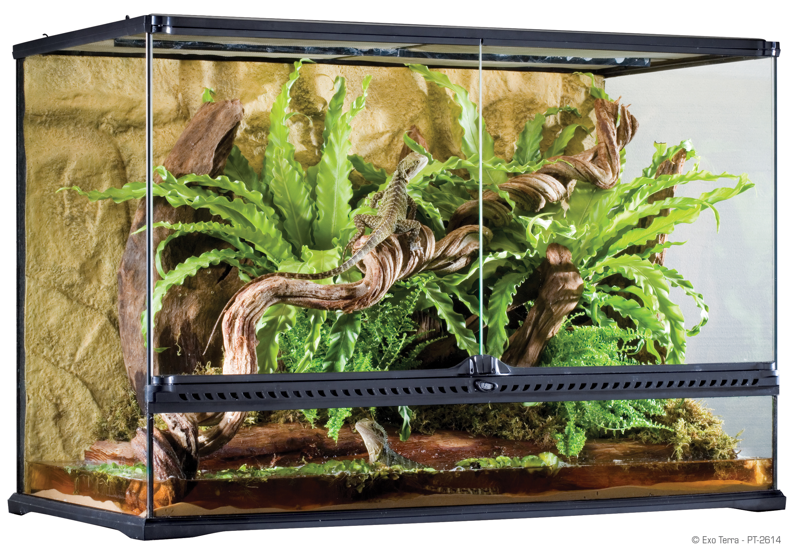 water and terrarium You are here how to construct a natural looking terrarium  another option is to create a water feature by using a suitable rock or piece of drift wood,.
