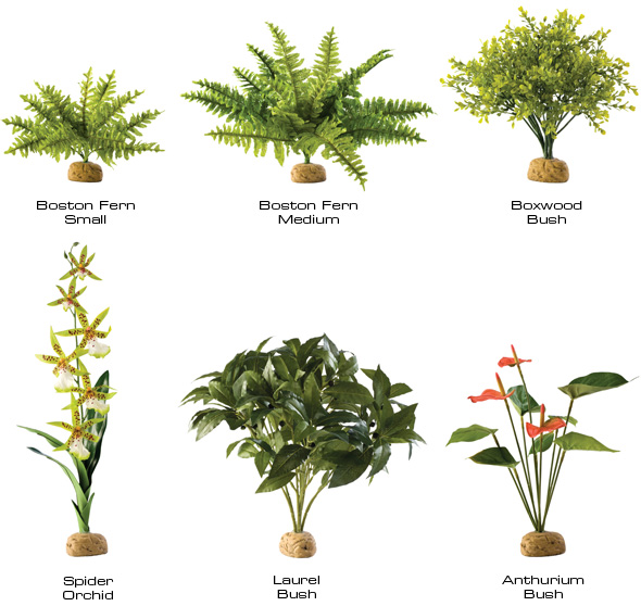 Ground Rainforest Plants