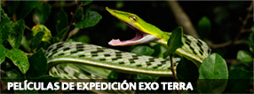 Exo Terra Expedition Movies