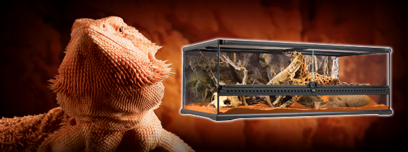 Bearded Dragon  Pet Bearded Dragons  Pet Lizards