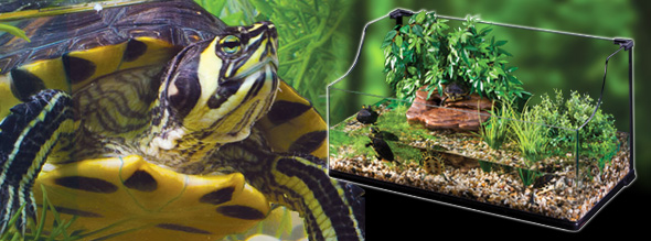 Extended water surface Stylish bent glass aquatic terrarium Lower ...
