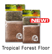 Tropical Forest Floor