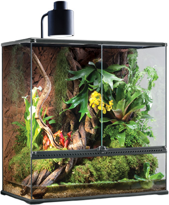 Terrarium with SunRay Fixture